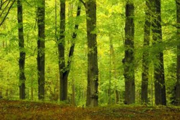 欧洲榉木原木价格稳定