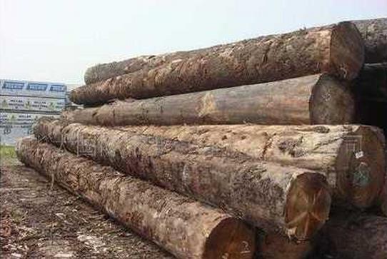 根据元旦前的调查数据,东北俄罗斯原木的价格并无太大的波动。不过也不难发现,2016年木材供应商对东北俄罗斯原木材的进口谨慎度十分之高。在这样的紧张大环境中,商家在东北俄罗斯材上的经营积极性也开始降低。 据可靠消息,尤其是广东市场,多元化的激烈竞争已经让很少木材商愿意经营东北俄罗斯材,如有需求,厂家都需要直接到口岸进货。面对这一形势,不得不说,2016年东北俄罗斯原木市场的行情不容乐观。 如此低迷的市场走势,对各个市场经销商进购新货的积极性造成了消极的影响。在市场需求疲弱的情况下,上游绥芬河、满洲里等口岸
