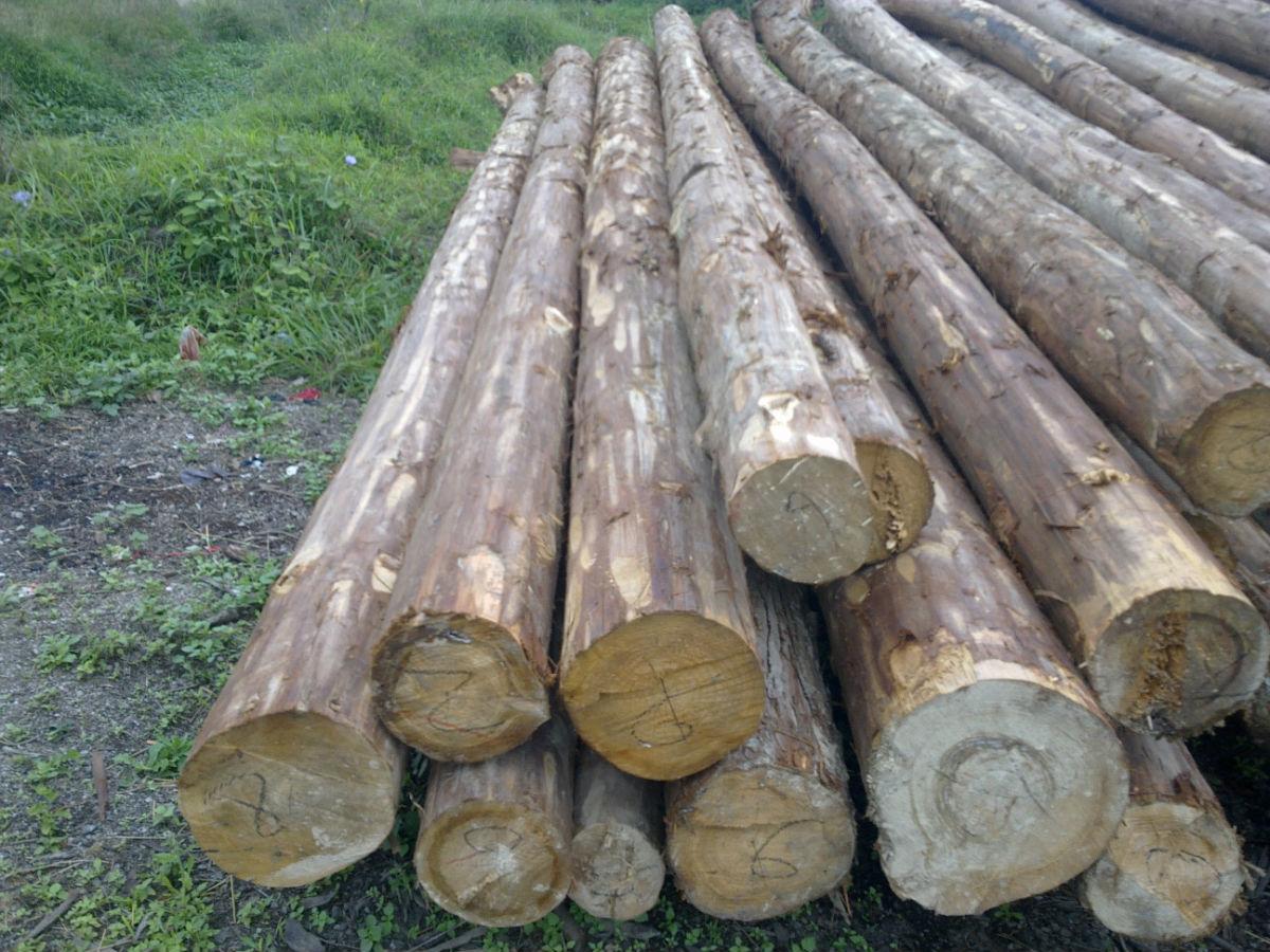 杉木木材多为黄白色,质地较软、十分细致,带有香气,纹理通直,容易加工,多用于建材、家具、桥梁等的制作,近期其市场价格有所下降。根据什么供销数据库数据显示,规格为1.5到6米长*3到12公分的四川杉木最新市场报价为880元/立方米。