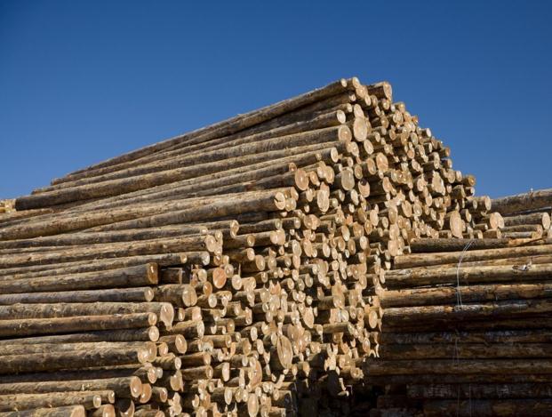 木材加工行业需求旺盛 将带动下游产业发展