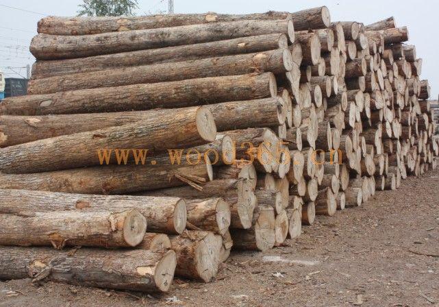 首页 榆木(旧料)  1榆木原木  ¥1000 材质:榆木 单位:立方 价格: ¥